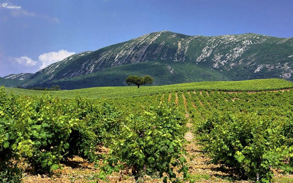 Serra da Arrábida | Produção vinícola