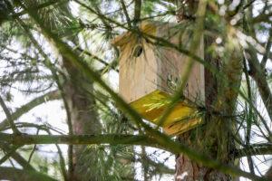 Monitorização de aves do Estuário do Sado