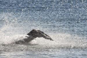 Setúbal Open Water Race