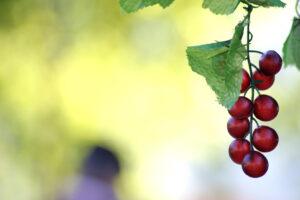 """""""Tradições, Sabores e Aromas de Azeitão"""""""