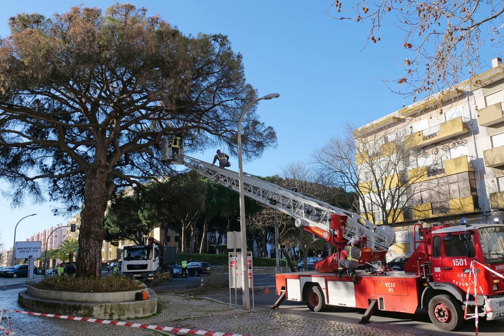 Abate de árvore na Av. Rodrigues Manito3