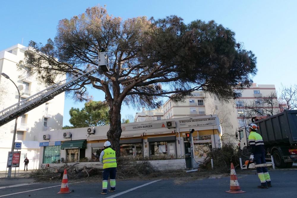 Abate de árvore na Av. Rodrigues Manito1