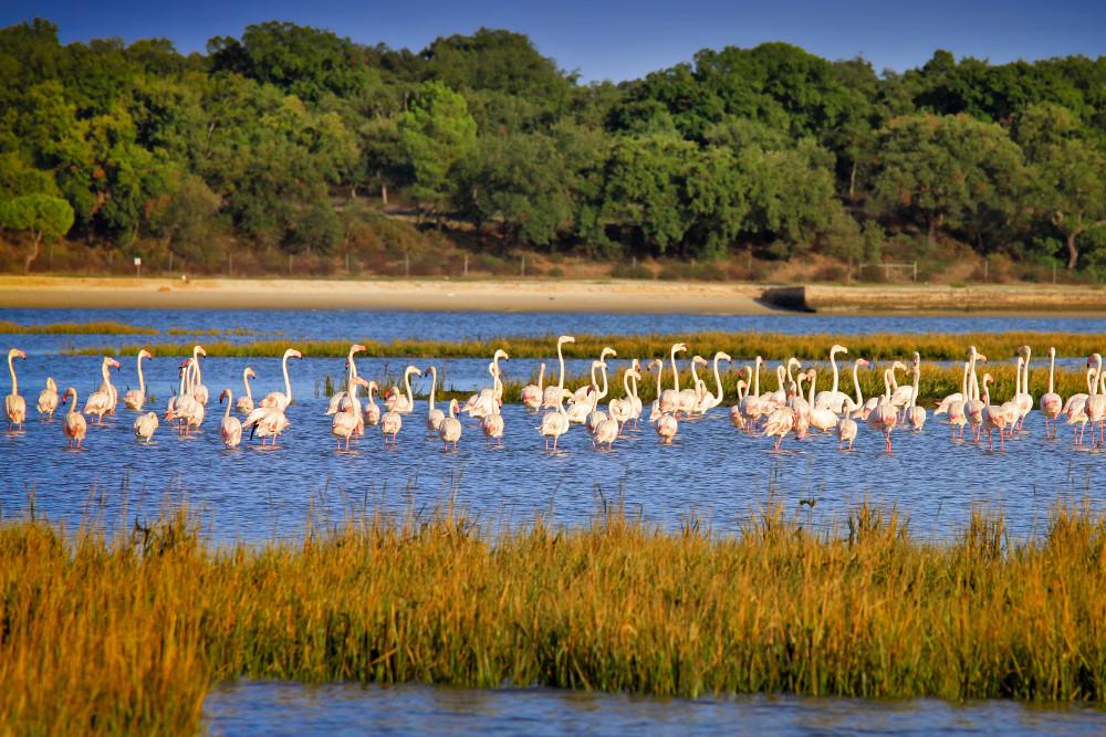 Flamingos | Estuário do Sado | birdwatching