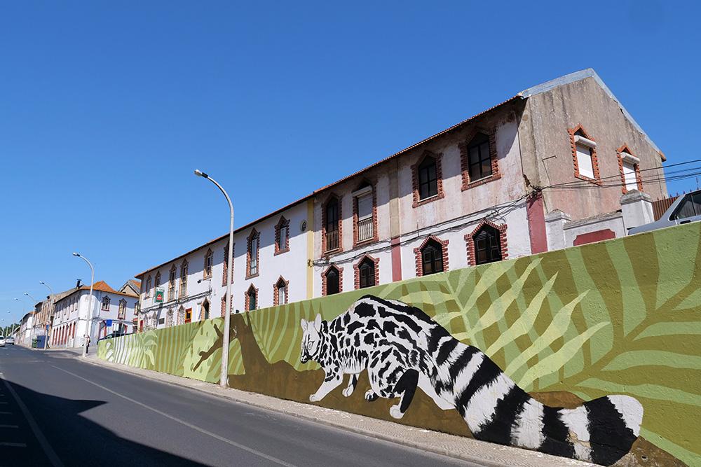 Setúbal Mais Bonita 2019 | Rua António José Batista