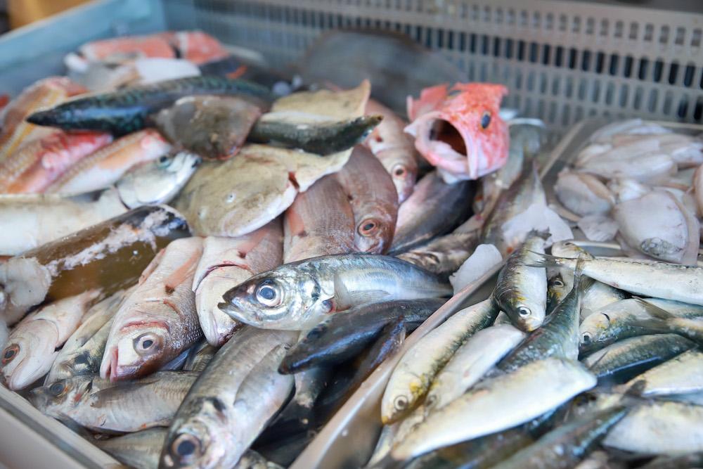 Fish Day 2019