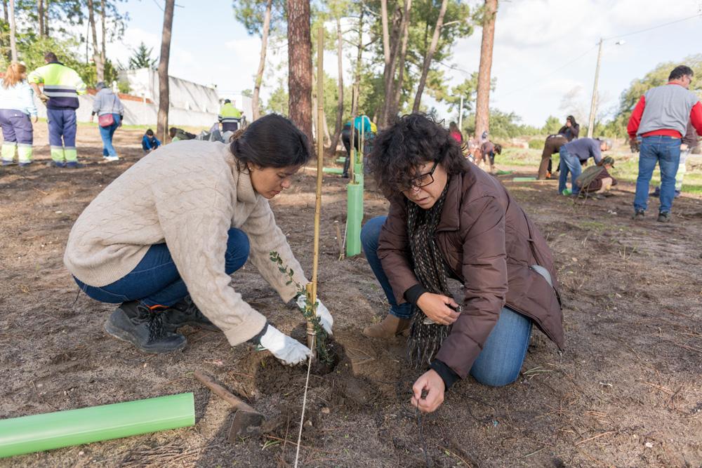 Plantação de árvores Pinhal de Negreiros