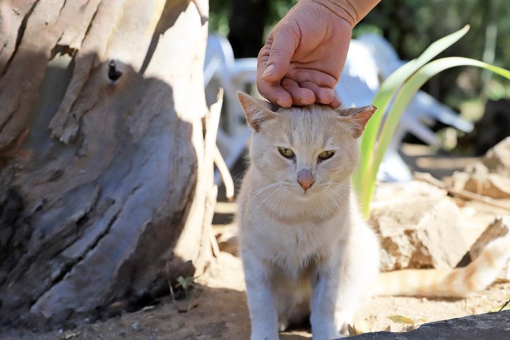 Dia Mundial dos Animais - devolução de gatos à comunidade