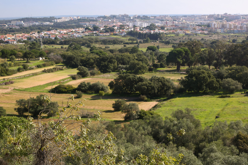 Balanço dos incêndios rurais no concelhos de Setúbal, Palmela e Sesimbra | 2020