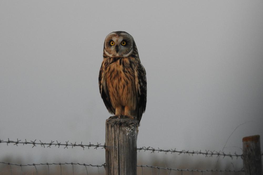 Aves Noturnas