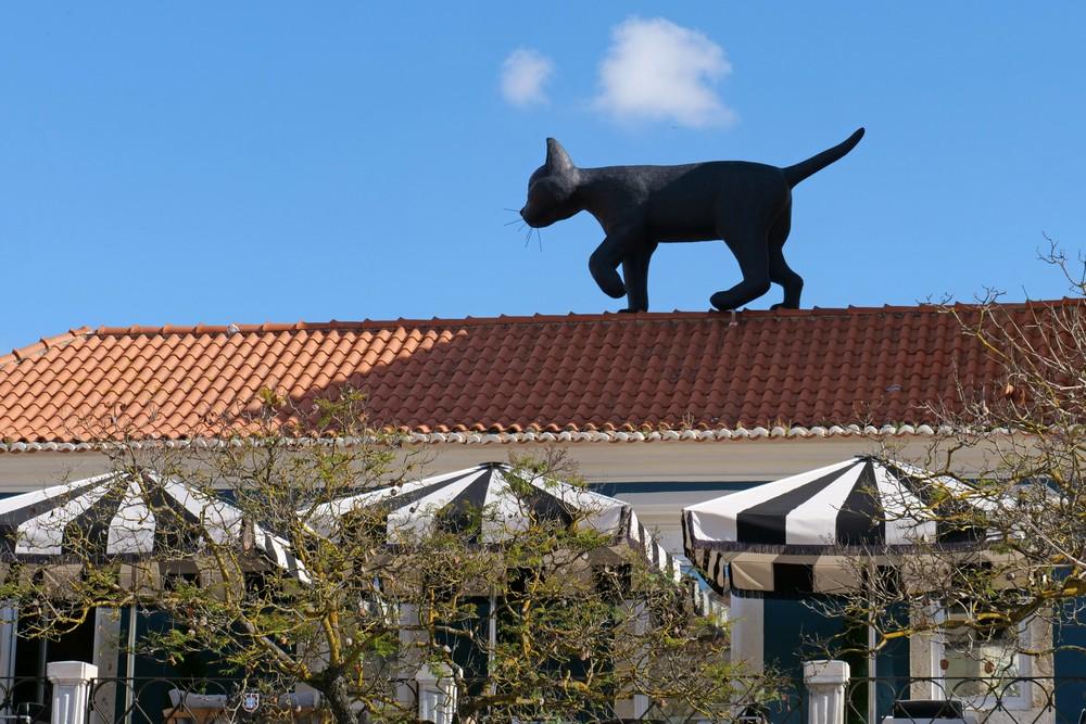 Casa do Turismo | 'O Gato e o Vento'