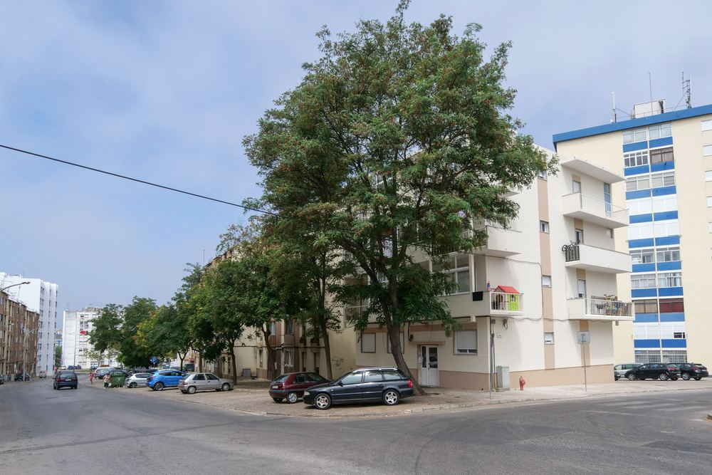 Reabilitação   edifício na Rua Álvaro Gomes